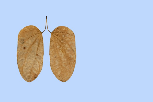 Home Remedies To Cleanse Lungs